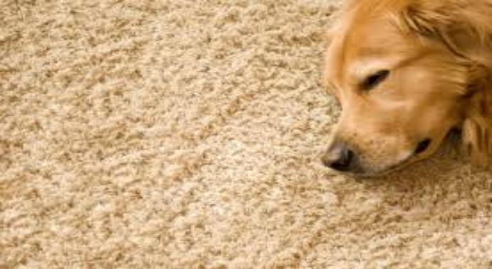 Rug-Ratz professional carpet cleaner / Shreveport/Bossier